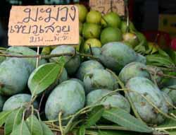 Mango - Ma-muang - Thailand For Visitors